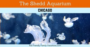 The Shedd Aquarium in Chicago is a leader in the zoo and aquarium industry, and is the largest aquarium in the world. Located right in downtown!